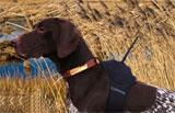 Garmin Astro – Dog Tracking System